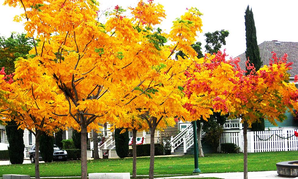 autumncolors_980